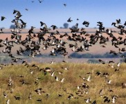 Doves-Photo-Gallery-Dove-Hunting-In-Argentina-With-Nacho-CyC-Outfitters