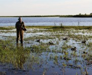 Ducks-Picking-up-Photo-Gallery-Duck-Hunting-In-Argentina-With-Nacho-CyC-Outfitters