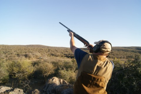 Dove shooter